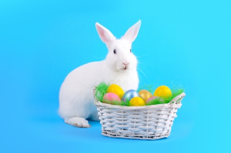 bunny ears: Easter - sweet and fluffy white bunny, basket with  colored eggs on a red background