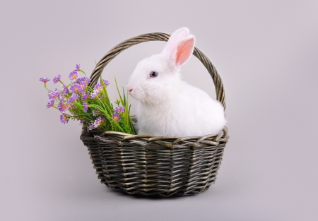 Easter - sweet and fluffy white bunny in a basket with  flowers  on a grey background  photo
