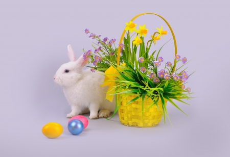 Easter - sweet and fluffy white bunny, basket with daffodils and other flowers and colored eggs on violet background  photo
