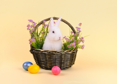 Easter - sweet and fluffy white bunny in a basket with flowers and colored eggs on pale yellow background   photo