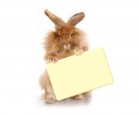 Zitten Funny Bunny bedrijf plaat, geïsoleerd op een witte achtergrond Stockfoto