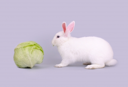 Cute white bunny eats lettuce, isolated on a gray background  photo