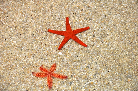 Summer holiday - Red starfish in the shallows of the beach photo