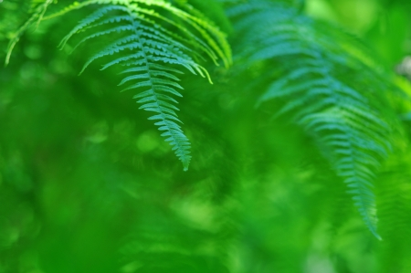 Nature - Beauty frond close-up in sunny forest photo
