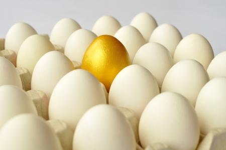 gallina con huevos: Huevo de oro entre los huevos de gallina blancos en envase de cart�n