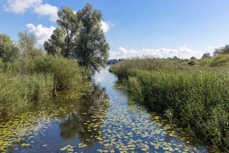seerosen: Lake Chiemsee, Bavaria, Germany - August 7th, 2016. Outfall of River Prien in Rimsting