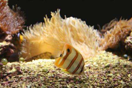 goldenfish Stock Photo - 965295