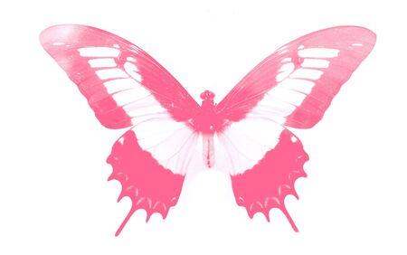 vlinder collectie - prachtige vlinder met zijn levendige kleuren Stockfoto