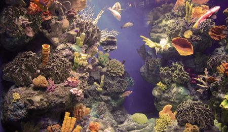 rich, vibrant color into the marine aquarium Stock Photo - 859960