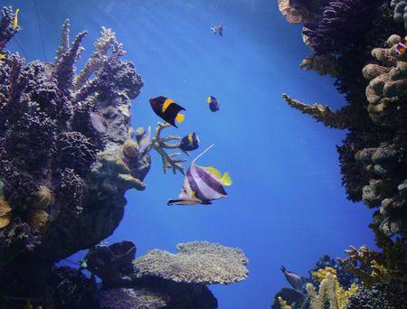 rich, vibrant color into the marine aquarium Stock Photo - 859963