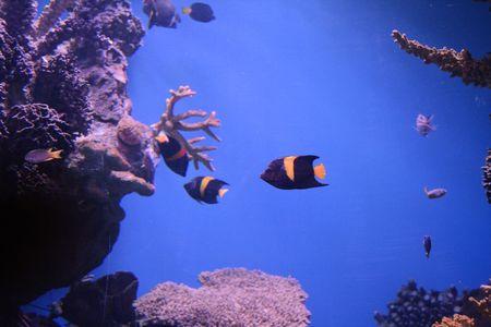 rich, vibrant color into the marine aquarium Stock Photo - 859964