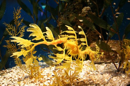 rich, vibrant color into the marine aquarium Stock Photo - 859974