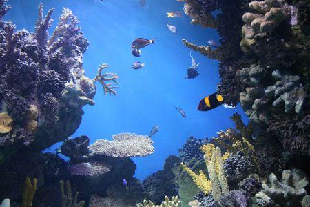rich, vibrant color into the marine aquarium Stock Photo - 859977
