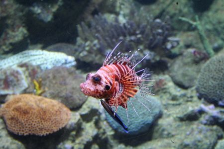 rich, vibrant color into the marine aquarium Stock Photo - 859979