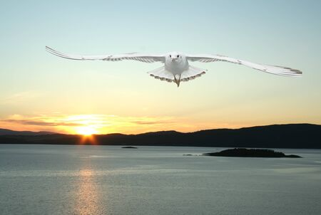 a seagull flying over the sea - beautiful landscape from norwegian fjords