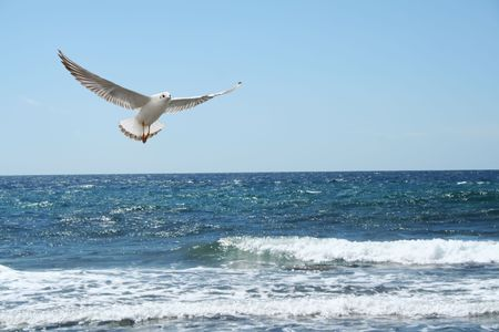 a beautiful seagul flying over the sea photo