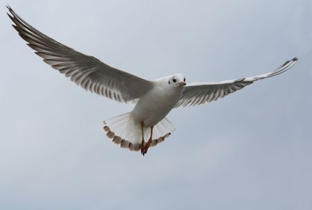 As a magical seagull, flap your wings and fly