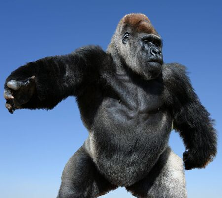 comic close-up image of gorilla - isolated on blue background