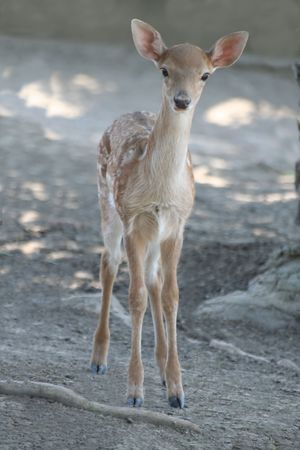 beautiful small fawn - wildlife photo