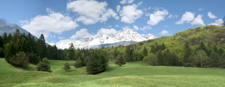 Paesaggio montano - foresta di abeti verde