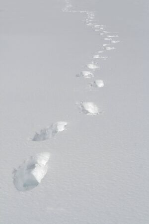 footmark: Snow footprint