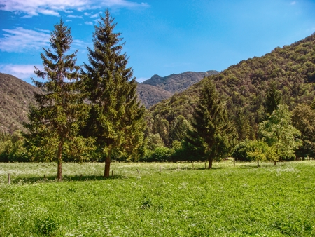 a view of the fir trees and a mountain meadow on a sunny day - lanscape