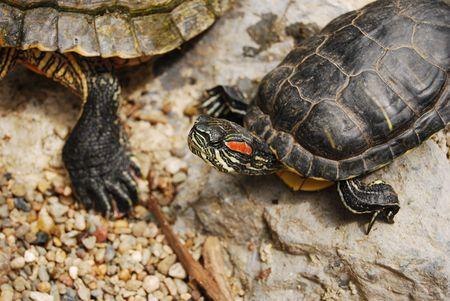 breathe easy: turtles