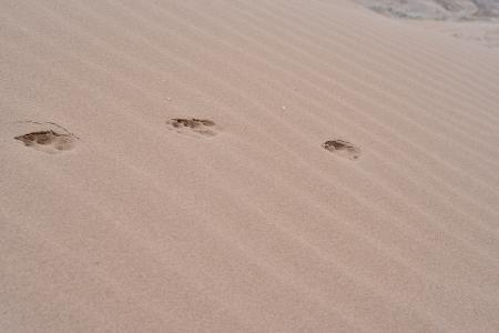 animal path in desert