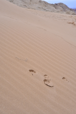 animal path in desert photo