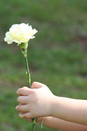 Little hand holding flower, carnation. photo