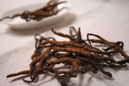 medecine: Chinese medecine cordyceps on table mat and white plate