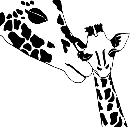 solated on white: Giraffe family coloring, solated on white background