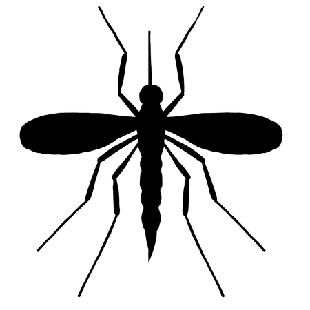 unpleasant: High quality mosquito isolated on white background Illustration