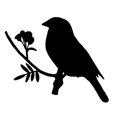 tomtit: High quality original Silhouette bird on ash branch Illustration