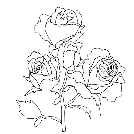 rose tattoo: hiqh quallity rose for coloring of tattoo drawn in outline