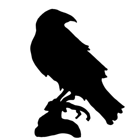 corvus: Very high quality original trendy  vector raven or crow silhouette