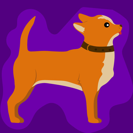 whelps: High quality original trend vector illustration of a cute little chihuahua dog Illustration