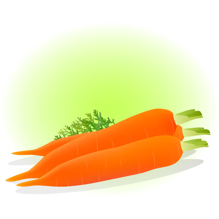 haulm: Very high quality original realistic trendy vector illustration of a carrot can be used for juice, label, diet, fresh or natural products Illustration