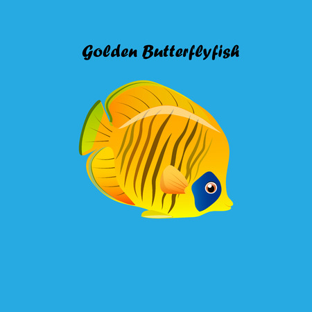 tang: Very high quality original trendy vector illustration of Golden Butterflyfish. Chaetodon semilarvatus Illustration