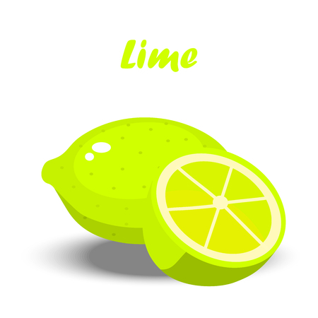 Very high quality original trendy illustration of a fresh lime and slice