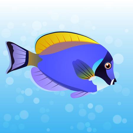 acanthurus: Very high quality original trendy vector illustration Powder Blue Tang fish, Acanthurus leucosternon . Illustration