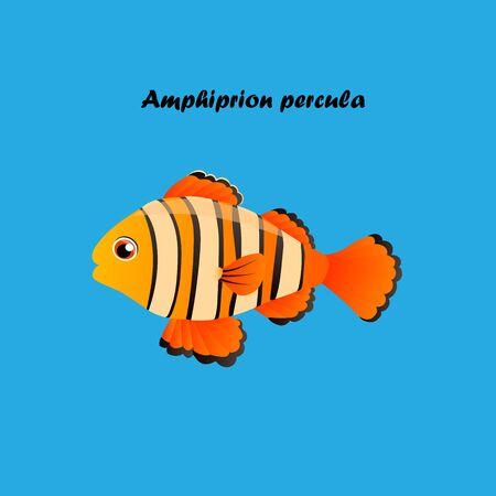 acanthurus: Very high quality original trendy vector illustration of Ocellaris clownfish, Acanthurus leucosternon .