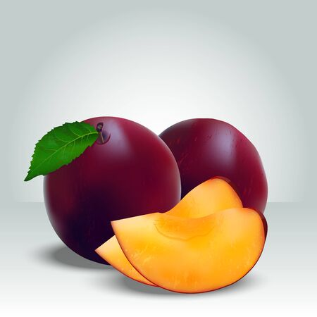 Very high quality original trendy realistic vector illustration of whole ripe plums fruit with half and leaves