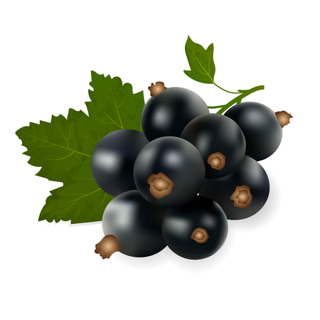 Original trendy vector illustration of an fruit black currant isolated on white background
