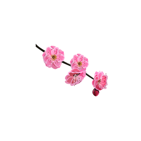membrillo: Flor de cerezo rojo