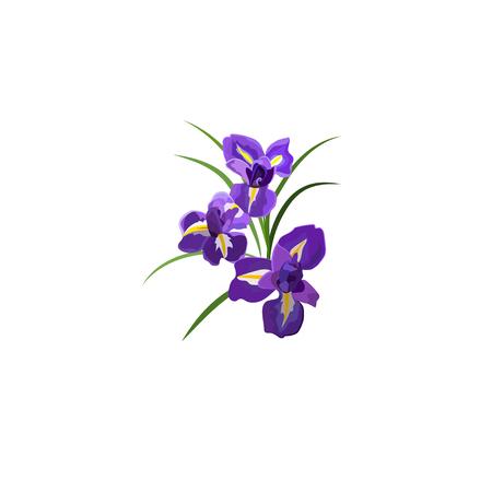 Paarse Iris bloemen