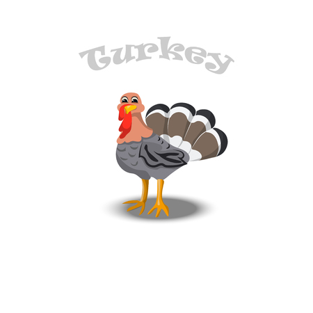 turkey for thanksgiving Celebration Design Illustration