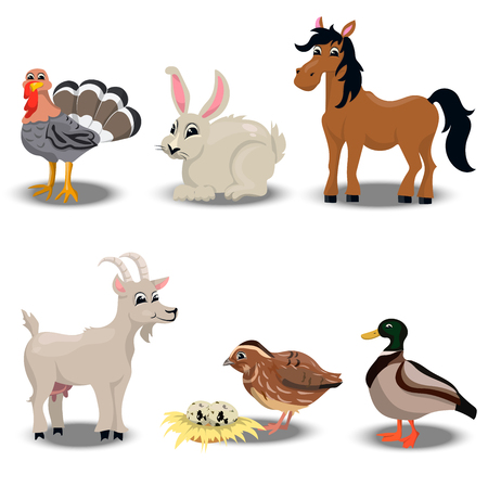 trendy vector set of a happy turkey for thanksgiving Celebration Design, rabbit for easter, goat, horse, duck and quail.