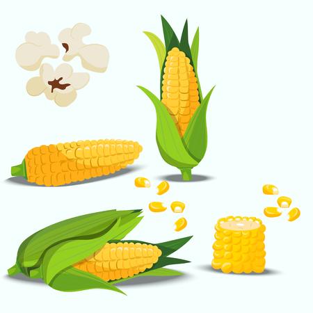 Sweet golden corn Illustration