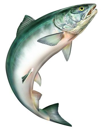 Salmon to jump photo